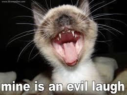 Meme Evil Laugh - mine is an cat meme cat planet cat planet
