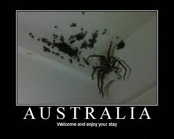 Kill Spider Meme - australian spiders they re not so bad scientific scribbles