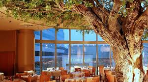artificial decorative trees for the home i just can t contain myself trees in the library i day dream of