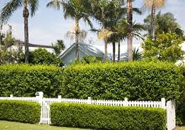 Landscaping Ideas For Backyard Privacy Backyard Landscaping Ideas For Privacy Lovetoknow