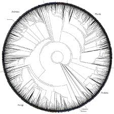 phylogeny and the tree of part 2