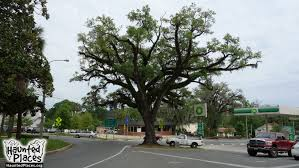the hanging tree haunted places monticello fl