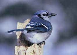 how to keep birds away from your garden the old farmer u0027s almanac