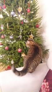 christmas pictures steemit