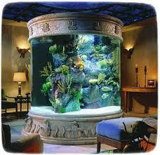 Betta Fish Decorations Betta Fish Tank Ideas Fish Pet Photos Gallery D1byrm6kq6