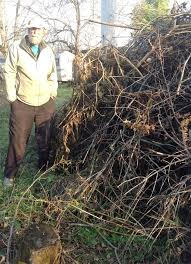 Backyard Habitat Brush Piles Improving Backyard Habitat Field Notes