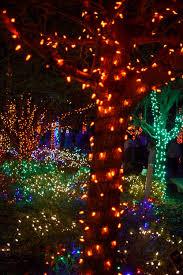 hundreds of thousands of lights on display at florida botanical