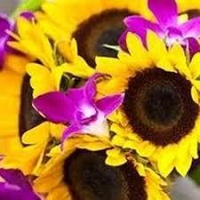 upsy daisy floral florists 5 main st boyne mi phone