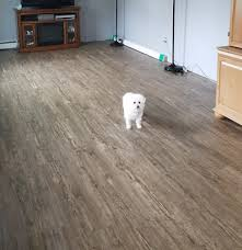 customer reviews of our pet flooring best floor for dogs