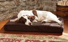 dream lounger memory foam dog bed dream lounger memory foam dog
