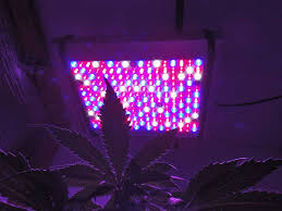why you should care about led grow lights edge hill herb farm