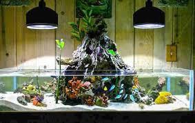 aquarium decoration ideas freshwater aquarium decoration idea for android free download com