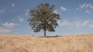 the giving tree a