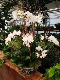 orchid arrangements interior white orchid arrangements and garden landscape for outdoor