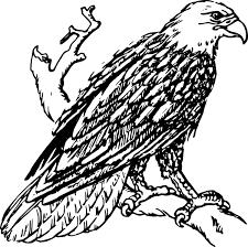 bald eagle clip art at clker com vector clip art online royalty