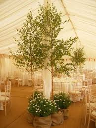 wedding trees decorative trees for weddings wedding corners