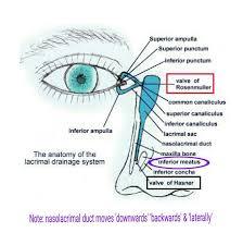 Eye Ducts Anatomy 32 Best Anatomy Images On Pinterest Anatomy Medicine And Grays