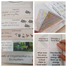 ecosystems interactive notebook pages food webs food chains and