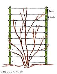 Trellis With Vines An Easy To Make And Inexpensive Trellis For Clematis Morning