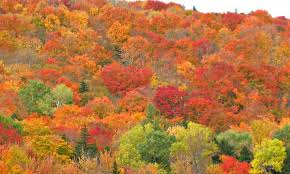 Vermont where to travel in november images Best places to see fall foliage in the northeast newsday jpg