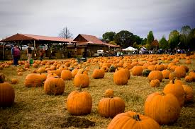 best pumpkin patches near portland