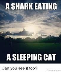 Sleepy Cat Meme - 50 weird sleep memes