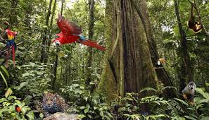 Forest Backdrop Rain Forest With Animals Bespoke Backdrop