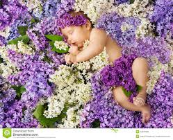 Lilac Flower by Baby In Lilac Flowers Newborn Child Greeting Card Small New Bo