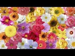 fresh flowers in bulk where to buy wholesale flowers for wedding order wholesale
