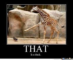 Rude Friday Memes - no one told this giraffe that it s rude to point by cbsman meme