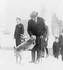 Sitting In A Room Playing Russian Roulette - the white house u0027s first celebrity dog history smithsonian