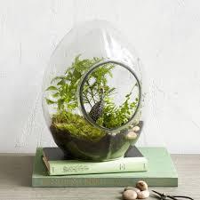 all glass terrariums west elm