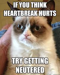 Heart Break Memes - if you think heartbreak hurts cat meme cat planet cat planet