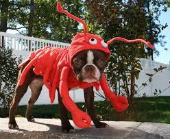 Lobster Costume Lobster Dog Pug Lobster Costume Halloween Costumes Pets U2026 Flickr