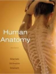 Human Anatomy And Physiology Study Guide Pdf Essentials Of Human Anatomy U0026 Physiology 11th Edition Free