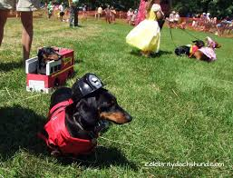 Halloween Costumes Miniature Dachshunds 166 Dressed Doxies Images Dachshunds