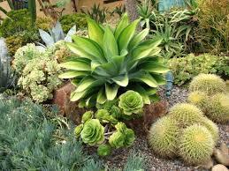 heat loving plants 24 best drought tolerant plants that grow in lack of water balcony