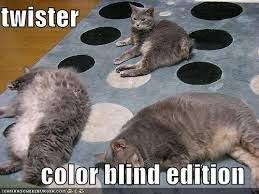 Are Dogs And Cats Color Blind 55 Best Cats Images On Pinterest Cat Vs Dog Cats Fighting And