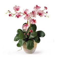 silk orchids nearly mini phalenopsis silk orchid flower arrangement