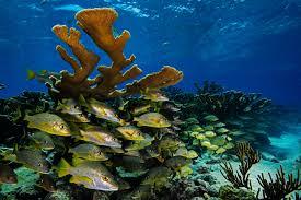 Azure Vase Sponge Facts Cuba U0027s Underwater Jewels Are In Tourism U0027s Path