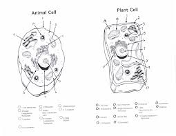 animal cell diagram coloring page coloring pages
