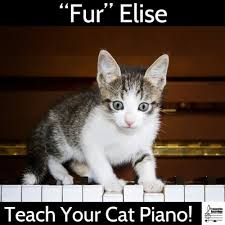 Cat Playing Piano Meme - fur elise teach your cat piano by various artists on music