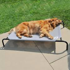 Elevated Dog Beds For Large Dogs Furniture Coolaroo Elevated Pet Bed Small Dog Cots For Large