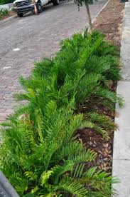 Landscaping Ideas For Florida by 27 Best Landscaping Ideas Images On Pinterest Landscaping Ideas