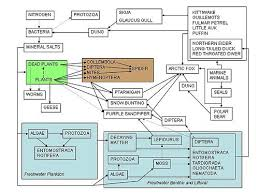 high earth science ecosystems wikibooks open books for