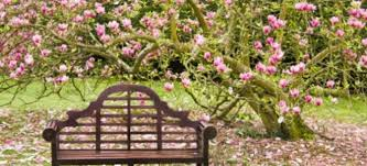 a dozen of the easiest flowering trees to grow doityourself