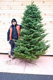 cornell farm christmas trees u2014 cornell farm