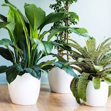 how much light do pot plants need 170 best house plants images on pinterest indoor house plants
