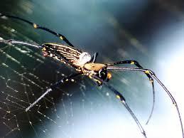 spider wallpaper 1024x768 59097