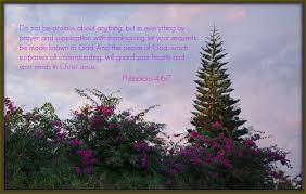 in prayer and supplication with thanksgiving peace picture my thoughts by myra johnson
